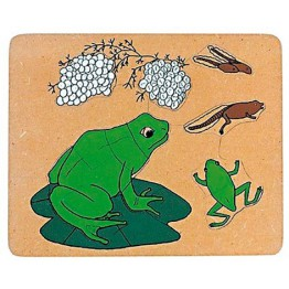 Frog life cycle wooden puzzle