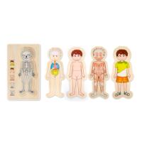 Multi-layer human body puzzle - boy