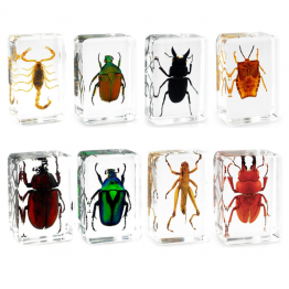 Insect specimen set of 5