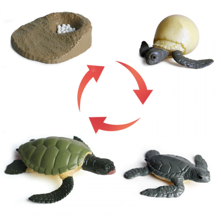 Turtle Life Cycle Figurines