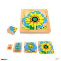 Multi-layer sunflower life cycle puzzle
